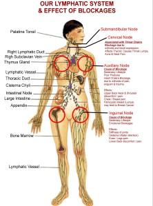 Effects of Emotions on Lymphatics